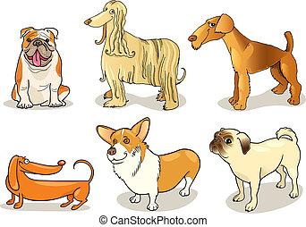 purebred, kutyák