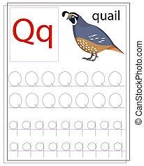 q, alphabet., angol, worksheet, levél, tanul, gyerekek