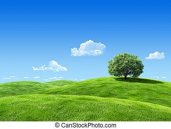 részletes, legelő, természet, nagyon, fa, 7000px, -, gyűjtés, sablon
