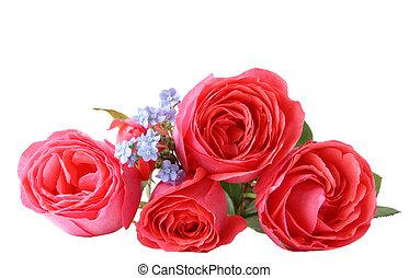 rózsa, forgetmenot