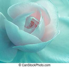 rózsa, rózsaszínű, kert