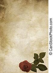 rózsa, szüret