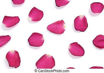 rózsa szirom