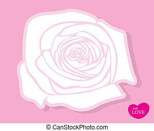 rózsa, vektor