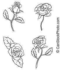 rózsa, virág, állhatatos, gyűjtés