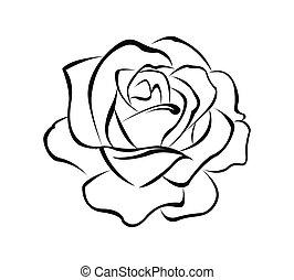 rózsa, virág