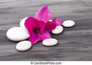 rózsaszínű, élet, zen, megkövez, ásványvízforrás, fehér, mozdulatlan, orhidea