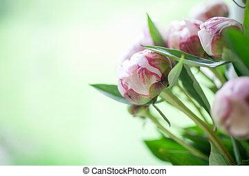 rózsaszínű, babarózsa