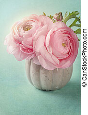 rózsaszínű, boglárka