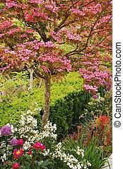 rózsaszínű, fa, kousa, somfa
