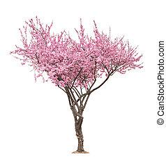 rózsaszínű, fa, sacura