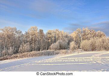 rózsaszínű, gyönyörű, tél, -, erdő, félhomály, táj