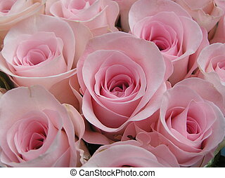 rózsaszínű, kellemes, agancsrózsák