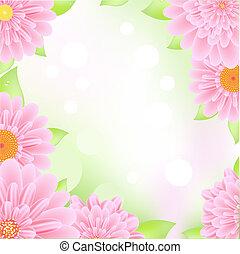 rózsaszínű, keret, gerbers