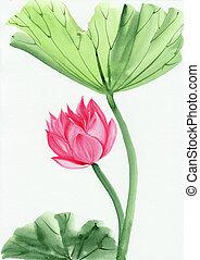 rózsaszínű, lotus virág, vízfestmény festmény