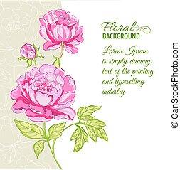 rózsaszínű, peonies, minta, háttér, szöveg