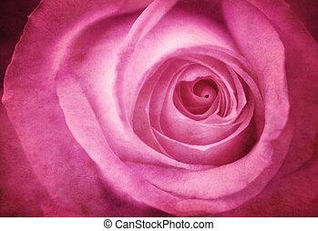 rózsaszínű rózsa, grunge