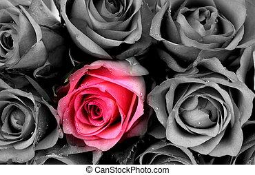 rózsaszínű rózsa, szürke