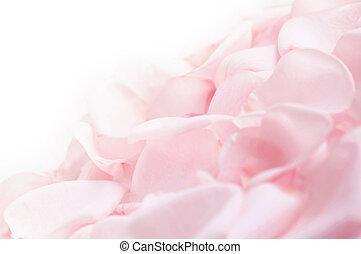 rózsaszínű rózsa, szirom