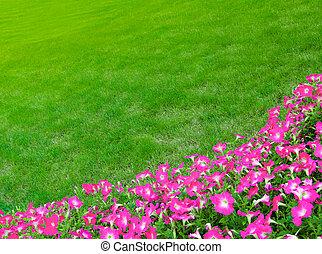 rózsaszínű, széles, fű, kaszáló, zöld, menstruáció
