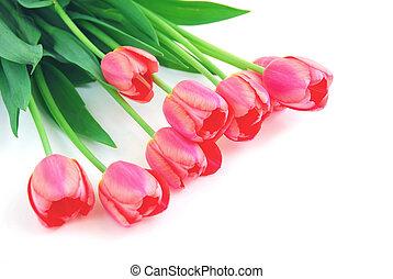 rózsaszínű, tulipánok, fehér