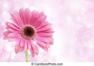 rózsaszínű virág, gerbera