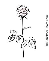 rózsaszínű virág, rózsa, elszigetelt, háttér, fehér