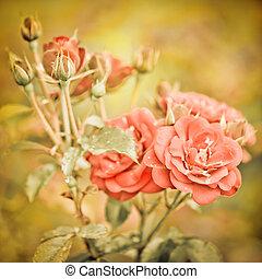 rózsaszín rózsa, elvont, menstruáció, romantikus