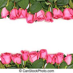 rózsaszín rózsa, fehér, megtölt