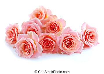 rózsaszín rózsa, fehér