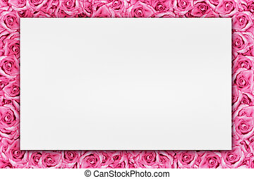 rózsaszín rózsa, háttér