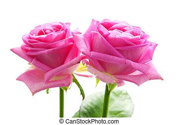 rózsaszín rózsa, két