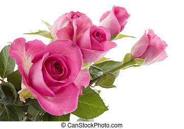 rózsaszín rózsa, menstruáció