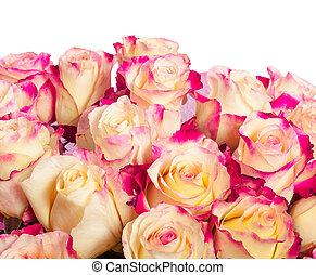 rózsaszín rózsa, sárga háttér