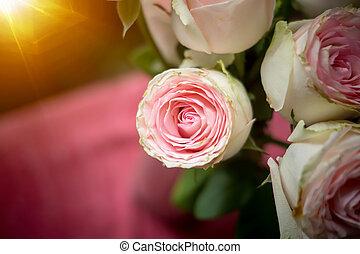 rózsaszín rózsa