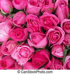 rózsaszín rózsa, szeret, háttér