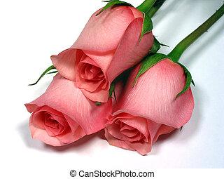 rózsaszín rózsa, white háttér