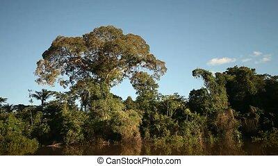 rainforest, amazon, bitófák
