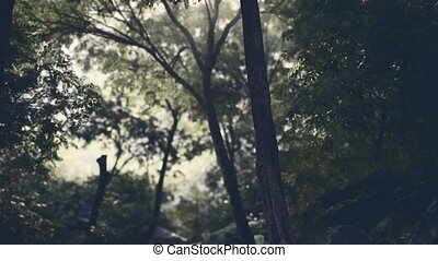rainforest, titokzatos, köd