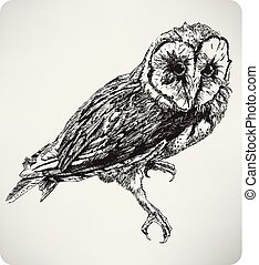 rajz, illustration..eps, bagoly, kéz, vektor, madár