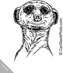 rajzol, bevés, meerkat, ábra, tinta