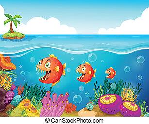 reffel, korall, izbogis, fish