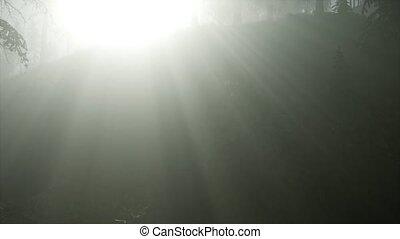 reggel, köd, erdő, ősz