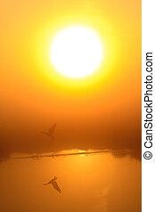 reggel, tó, napkelte, harmat