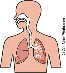rendszer, légzési