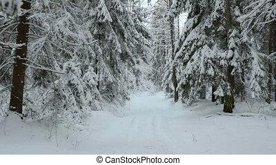 repülés, erdő, tél