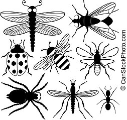 rovar, nyolc, körvonal