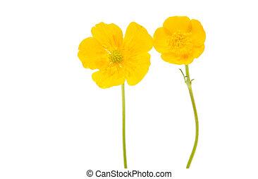 sárga, elszigetelt, virág