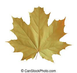 sárga, vektor, elszigetelt, ábra, leaf.