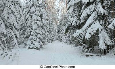 síelő, erdő, tél
